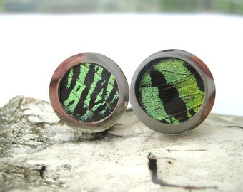 Real Insect Wing CuffLinks - fly away with me, green sunset moth