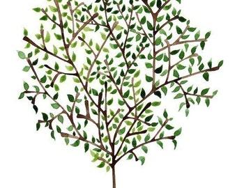 Watercolor Art Print Olive Tree Kitchen Wall Decor