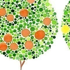 Fruit Tree Trio Watercolor Art Print Kitchen Wall Tree Artwork