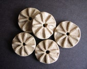 Bursts Stoneware clay bead set  in Oatmeal