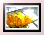 Reserved for Carissa- Sun flower sun bathing photo 5X7 inch print