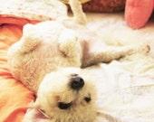 Puppy Notecard Blank Inside
