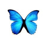 ON SALE Beautiful Blue Morpho Butterfly Pin Brooch from Hoolala