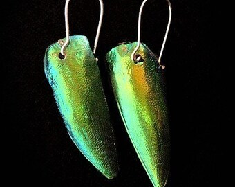 REAL Jewel Beetle Wing Earrings