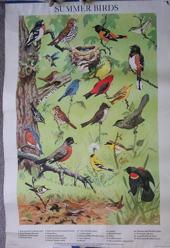 2 1946 Jacob Bates Abbott Posters Winter Birds and Summer Birds
