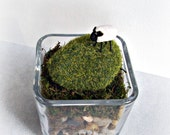 Terrarium, Your Own Personal Pasture Complete with Tiny Porcelain Sheep
