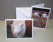 RESERVED for LynEllin - Thinking of Ewe-Note Cards