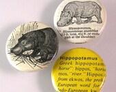 Hippopotamus Pinback Buttons