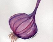 Original Purple Garlic Painting watercolor, Garlic art, 4 x 6, Vegetable series