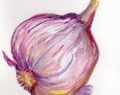 Purple Garlic watercolor painting original, Big Purple Bulb , vegetable series, 4 x 6, garlic art