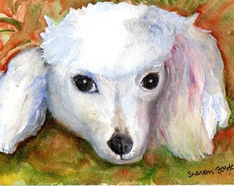 Poodle watercolor painting original 4 x 6, Dog art, small watercolor painting white poodle poodle portrait art, SharonFosterArt