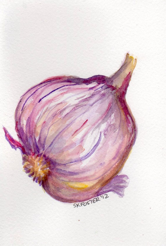 Purple Garlic watercolor painting original, Big Purple Bulb , vegetable series, 4 x 6, garlic art