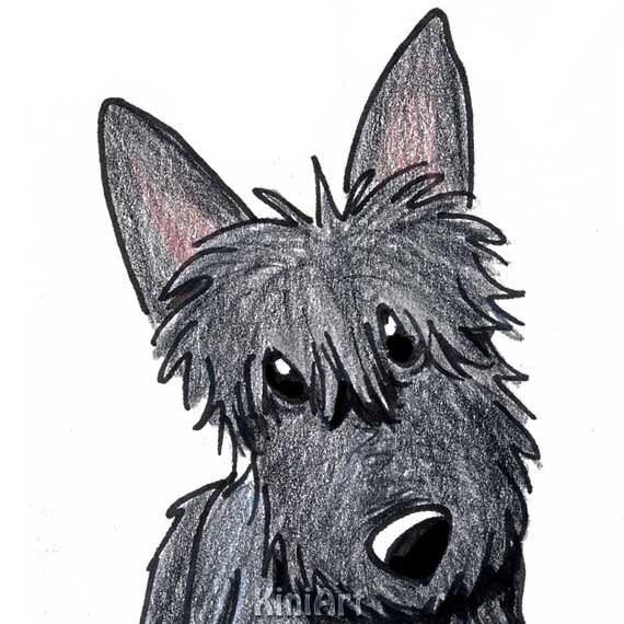 Scottish Terrier - Wikipedia