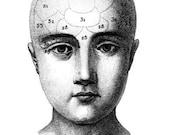 antique phrenology head illustration note card set of 2