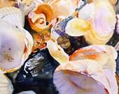 Shells Still Life Original Watercolour Painting SFA Small format art