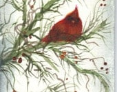 ACEO Cardinal nestled in the pines