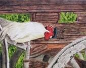 SALE--Farm Chicken Acrylic Painting on Canvas ART--Now 37.99