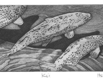 Koi fish etching print with aquatint and drypoint, hand printed limited edition intaglio print