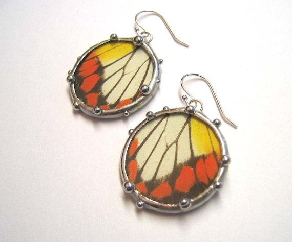 Delias Butterfly Wing Earrings