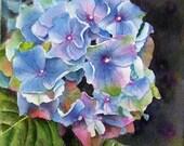 Blue Hydrangea, Flower print realism from an original watercolor 6x6 by Doris Joa