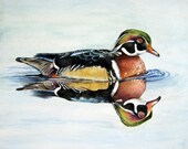 Wood Duck - Original 8 x 10 Watercolour Wildlife Painting