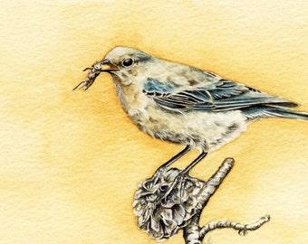 Tomorrow's Bluebird - Original 4 x 6 Watercolor