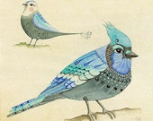 Aviary Study 2