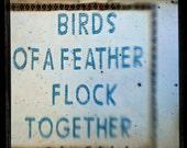 Let's Flock - 5x5 Fine Art Photograph