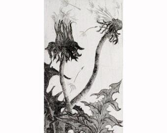 Dandelion Etching Drypoint Print
