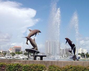 Dolphins, Sarasota, Florida