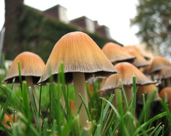 Mushrooms, photograph