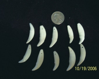 Package of 10 COYOTE CANINE TEETH Drilled 2093