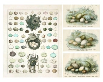 Bird Eggs - Blue Theme - Digital Collage Sheet - Instant Download