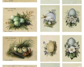 Bird Egg Trading Cards - Digital Collage Sheet - Instant Download