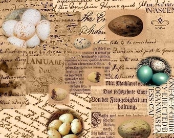 Wall-to-Wall Background and ACEO Size - Bird Eggs - 2 Digital Collage Sheets - Instant Download