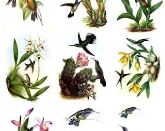 Hummingbirds - Plus BONUS On Text - 2 Digital Collage Sheets - Instant Download