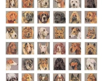 Dog Breeds - 1x1 - Digital Collage Sheet - Instant Download