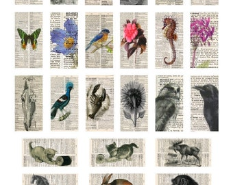 Novel Ideas Domino No. 1 - 1x2 - Digital Collage Sheet - Instant Download
