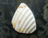 Shell Fragment Pendant - J