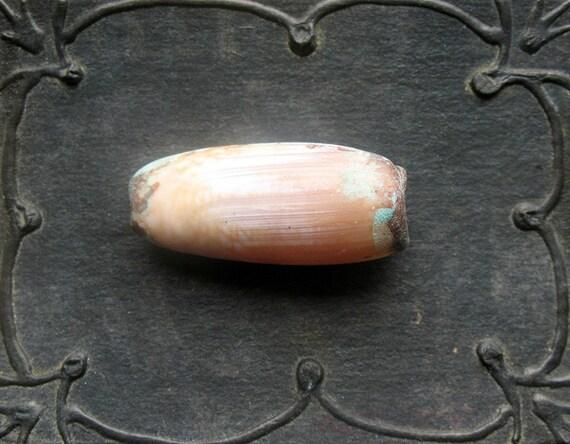 Patina Olividae Shell - Medium D