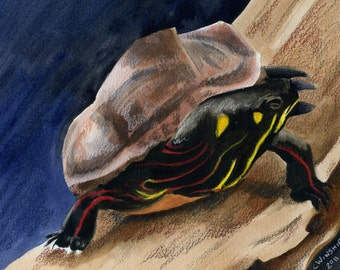 Turtle; a watercolor painting