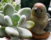 Photo Card - Birdy and Succulent