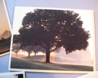Florida Sunrise Photo Card Lot