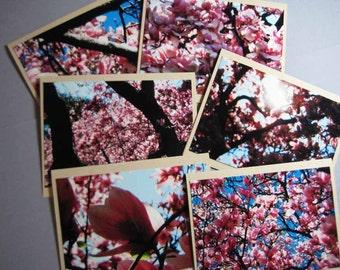 Pink Magnolia Photo Card Lot