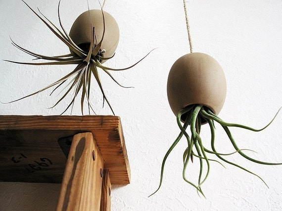 Hanging AirPlant Pod (tm) - Natural Moroccan Sand