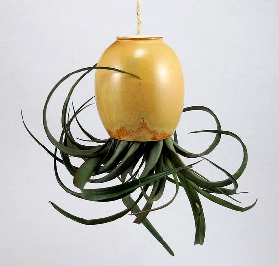 Hanging Air Plant Pod (tm) - Spicy Mustard Gold with hints of Brown