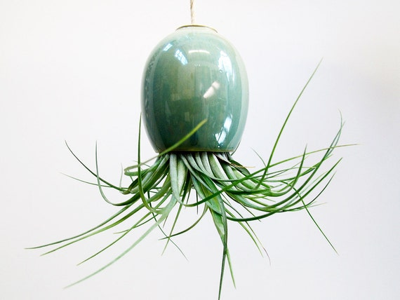 Hanging AirPlant Pod planter (tm) - Stunning Blue Green