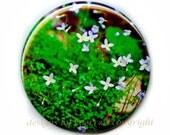 Flat Art Pocket Mirror - Original Photo Bluettes by Nathan Baerreis - n-57