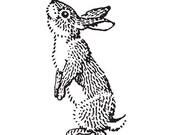 The Curious Rabbit Vinyl Wall Decal