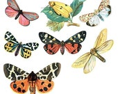 Vintage Styled Butterfly Vinyl Decals Set 1